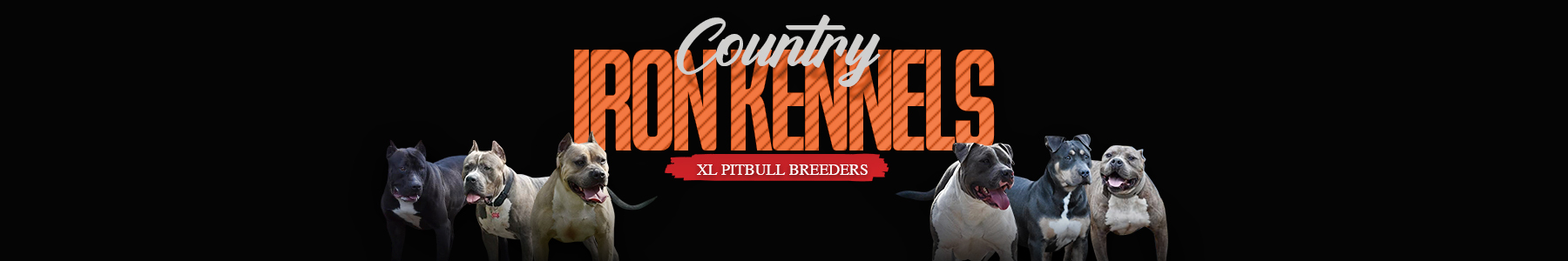 XL Pitbull & American Bully XL Breeders in North Carolina
